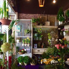 A Jardim de Pi, situada na Rua Presidente Wilson, esquina com a Avenida Paris, é uma loja de venda de plantas e flores naturais. Fazem arranjos a pedido e pelo que já vimos, são lindos.