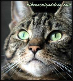 Athena Cat Goddess Wise Kitty: Wordless #WhiskersWednesday