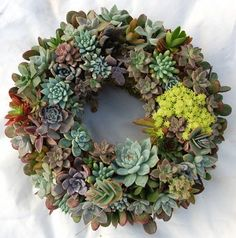 "Succulent Living Wreath - 9"" Diameter, http://www.amazon.com/dp/B006C8B8EG/ref=cm_sw_r_pi_awd_2w5dsb0DJ8JQV"