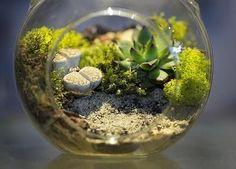 Jardines en miniatura Introduccion
