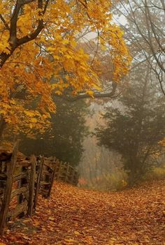 Fall forest landscape (autumn, yellow, trees, leafs, leaves, path, road, fence)