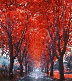 """"""" Le chemin peut parfois etre difficile & long mais au final nous arrivons toujours au bout """""""