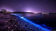 PHOTOS: Glowing Phytoplankton Turn Tasmania River Into Otherworldly Scene - AccuWeather.com Purple Sky, Her World, Tasmania, Mother Nature, Northern Lights, Light Up, Preserves, The Good Place, Electric Blue