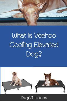 "If you're looking for a complete Veehoo Cooling Elevated dog bed review to decide if it's right for your pup, I've got you covered.    Some elevated dog beds cost upwards of $300 , so when you find one under $50, it's easy to think ""is it really worth it?    ""I've been trying it out with my own dog for about a month now and feel ready to give you a complete overview. Elevated Dog Bed, Dog Grooming Clippers, Cute Dog Collars, Bed Reviews, Dry Dog Food, Sleeping Dogs, Dog Crate, Dog Beds, Little Dogs"