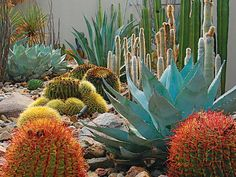 Southwest: Steve MartinoThe red yucca, brittlebush, and prickly pear at a Palm Springs, California, home also relate to the southwestern ... #DesertLandscape