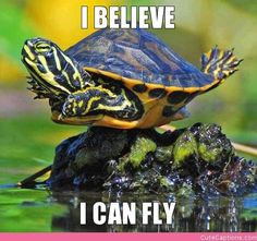 cute turtle laughing   BELIEVE, I CAN FLY