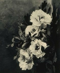 E Louise Marillier Peonies 1912 - fresh peonies today are just as lovely as portrayed in this work of art 100 years ago. Vintage Photography, Art Photography, Flower Photography, Photo Art, Illustration, Beautiful Flowers, Black And White, Drawings, Prints