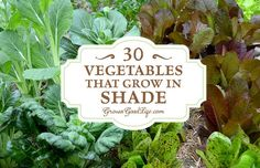There are plenty of vegetables that grow in shade, dappled sunlight, or with as little as 3-6 hours of sunlight per day.