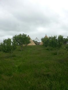 Looking through the orchard at the Tipis as they were being assembled.