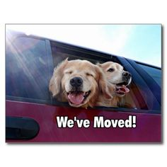 Golden Retriever We've Moved New Address Postcards by #AugieDoggyStore. Sold 35 copies to a customer in Algonquin, IL