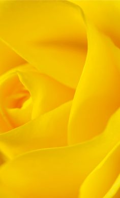 Yellow Rose My Favorite color! Jaune Orange, Epic Pictures, Mellow Yellow, Color Yellow, Bright Yellow, Yellow Sun, Colorful Roses, Aesthetic Colors, Yellow Submarine