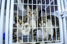 Apesar de o Brasil contar com leis que garantem proteção, muitos animais ainda sofrem com maus-tratos