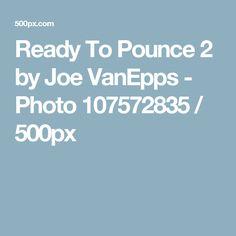 Ready To Pounce 2 by Joe VanEpps - Photo 107572835 / 500px