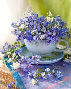 Свежие Цветы, Синие Цветы, Красивые Цветы, Экзотические Цветы, Цветочное Искусство, Сила Цветов, Посадка Цветов, Простые Цветы, Дикие Цветы
