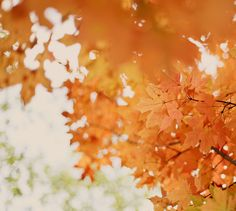 Orange Leaves In Fall Fall Is Coming, Dont Forget To Smile, Don't Forget, Seasons Of The Year, Summer Picnic, Fall Picnic, Reasons To Smile, Autumn Leaves, Autumn Fall