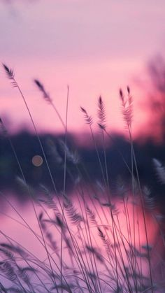 Nature and Travel Pastel Wallpaper, Cute Wallpaper Backgrounds, Pretty Wallpapers, Flower Wallpaper, Aesthetic Backgrounds, Aesthetic Iphone Wallpaper, Aesthetic Wallpapers, Beautiful Nature Wallpaper, Beautiful Landscapes