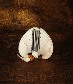 Tiny Book Journal made from a Sea Shell