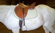 Seven points regarding saddle fitting put forward by the Society of Master Saddlers.  From Panther Run Saddlery