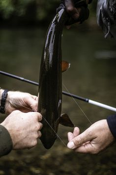 Beautiful NZ Trout caught and release Fishing Guide, Fly Fishing, Brown Trout, Charter Boat, Fishing Charters, New Zealand, Cruise, Carving, Outdoor