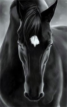 Black Horse wallpaper by xhani_rm - - Free on ZEDGE™ All The Pretty Horses, Beautiful Horses, Animals Beautiful, Black Horses, Wild Horses, Dark Horse, Cavalo Wallpaper, Animals And Pets, Cute Animals