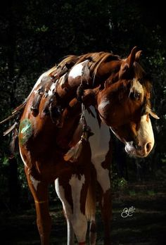 Warrior Paint Horse.  Horses in Native dress are always ruggedly beautiful.