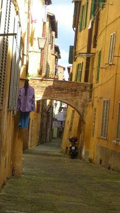 Nella Contrada della Tartuca, Siena