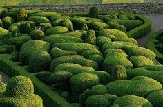 Wirtz Garden. Cloud Hedges RULE