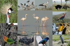 Tanzanian Birds Shot by Will & Beth S. of Salida, Colorado during their Jan 2013 safari with ADS