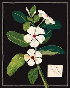 Mary Delany Paper Florals Keepsake Box: Mary Delany: 9780735336308: Amazon.com: Books