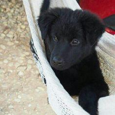 Песики-милашки тоже любят поваляться в гамаке от ZEN hammocks! #dog #hammock ##zenhammocks #cute #cutedog #собака #собачка #гамак #песик #милаха