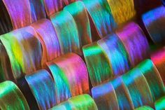 Nature Blows My Mind! Macro photos show jewel-like details of butterfly wings : TreeHugger