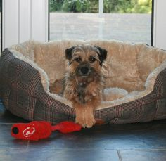 """BonnieBooBT on Twitter: """"Posing with my toy in the big dog bed! #BTPosse…"""