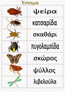 Ελένη Μαμανού: Έντομα Learn Greek, Illustrated Words, Greek Easter, Greek Language, Spring Crafts, Activities For Kids, Butterfly, Teaching, Greek Mythology
