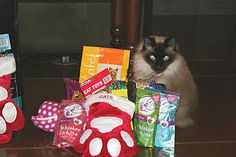"""Pi""""CAT""""so posing with her Christmas goodies from Santa"""