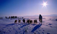 Greenland Dog Sledding