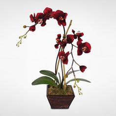 burgundy orchid - Google Search
