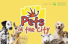 Event: Pets in the City 2018 – Dublin Dublin City, Local Events, Activities, Pets, Fun, Animals And Pets, Hilarious