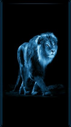 Wallpaper Black Lion With Blue Eyes