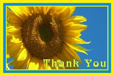 This is a Thank You card using a bright yellow sunflower