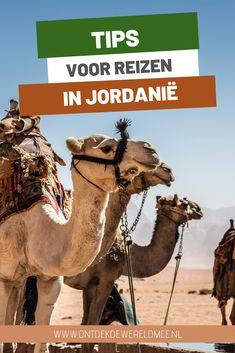 Wadi Rum, Jordan Travel, Abu Dhabi, Camel, Travel Tips, Middle East, Animals, Inspiration, Biblical Inspiration