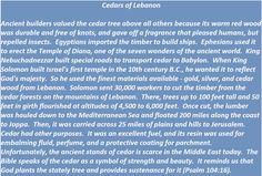 Cedars of Lebanon in biblical times