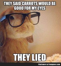 Optometry humor! Cute bunny! Follow us on Facebook @ www.facebook.com/eyecarefortcollins or visit our website @ www.eyecarefortcollins.com