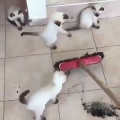 iPetGroup愛寵物 - 主人正要掃地,喵喵們馬上蜂擁而上「幫倒忙」....主人表示:「我已經掃這塊一年了!」(菸)