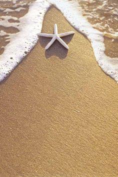 Starfish + Sand + Ocean = The Beach! 2560x1440 Wallpaper, Photo Images, I Love The Beach, Am Meer, Ocean Life, Ocean Beach, Sea Creatures, Under The Sea, Beautiful Beaches