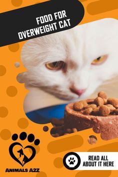 Using body weight as a primary guide, cats are considered overweight the moment they weigh 10 to 20% above the ideal body weight. Diet Cat Food, Cat Diet, Information About Cats, Ideal Body, All About Cats, Cat Facts, Body Weight, Cats And Kittens