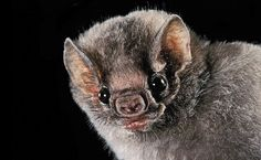 """""""The Secret Lives of Bats"""" teaches readers about the world's bats through the stories of Merlin Tuttle's experiences with them."""