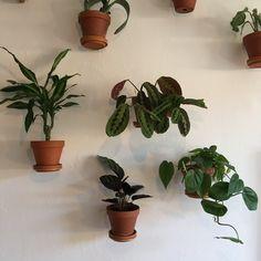 (Ingen titel), - Lilly is Love Garden Gates, Herb Garden, Garden Plants, Home And Garden, Rock Pathway, Garden Nook, The Beach, Raised Garden Beds, Small Gardens
