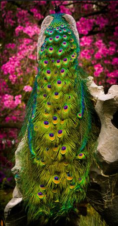 In my world, the Peacock feathers include Pink❣ Pretty Birds, Love Birds, Beautiful Birds, Animals Beautiful, Its A Beautiful Day, Nature Animals, Animals And Pets, Cute Animals, Wild Animals