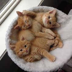I ❤️ orange kitties!