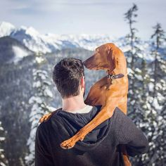 Thanks for taking time off this holiday to spend it with me Daddy! Vizsla Dog, Vizsla Puppies, Weimaraner, Dogs And Puppies, Doggies, Dog Photos, Dog Pictures, Hungarian Vizsla, Pet Style